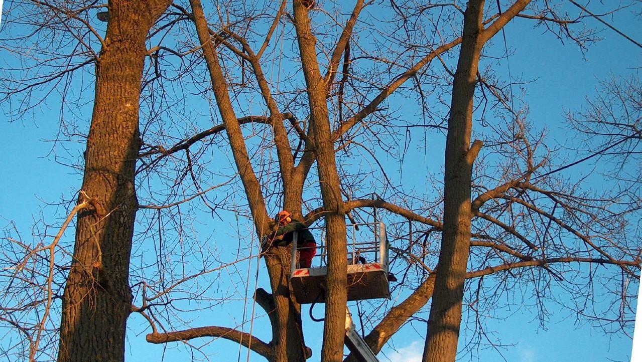 Baumpflege-von-Garterra-groß