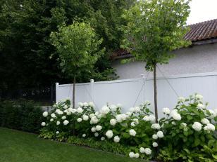 Architektonisch Moderner Garten Mit Pflanzen 2