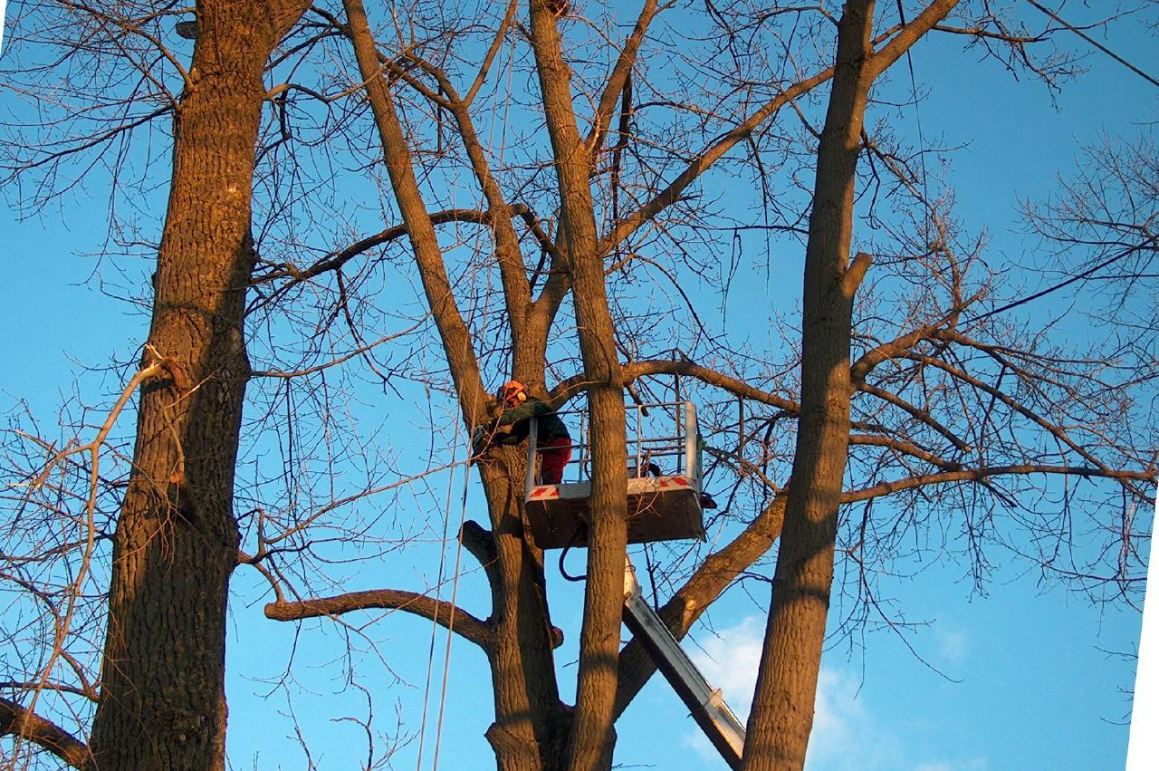 Baumpflege-von-garterra