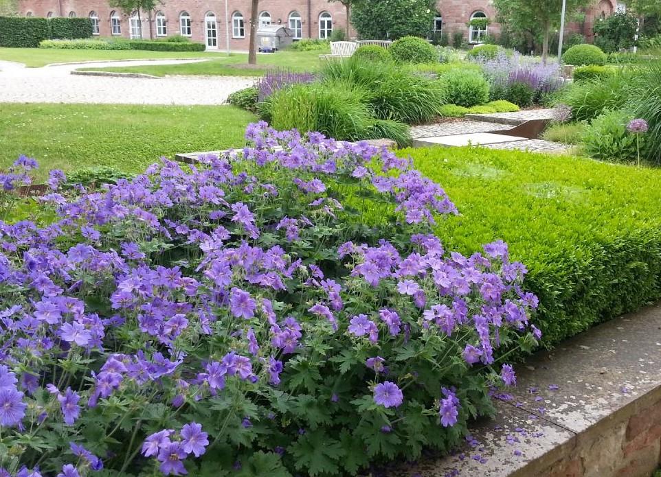 Garterra garten und landschaftsbau im raum marktheidenfeld for Garten und landschaftsbau