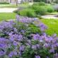 Gartengestaltung mit Pflanzen
